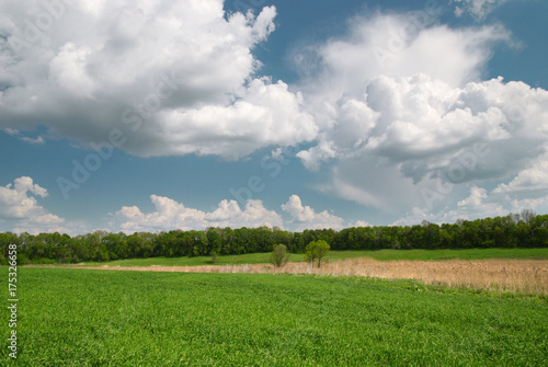 Poster Donkergrijs Field with green wheat and blue sky with forest