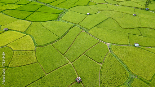 Staande foto Luchtfoto Aerial view of the green and yellow rice field, grew in different pattern, soon to be harvested, Nan, Thialand