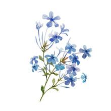 Watercolor Plumbago Flower Set