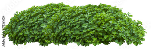 Beautiful fresh green bush isolated on white Wallpaper Mural