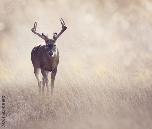 Deer in a grassland Wall mural