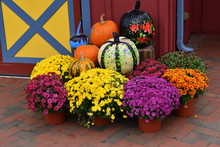 Display Of Mums And Decorated ...