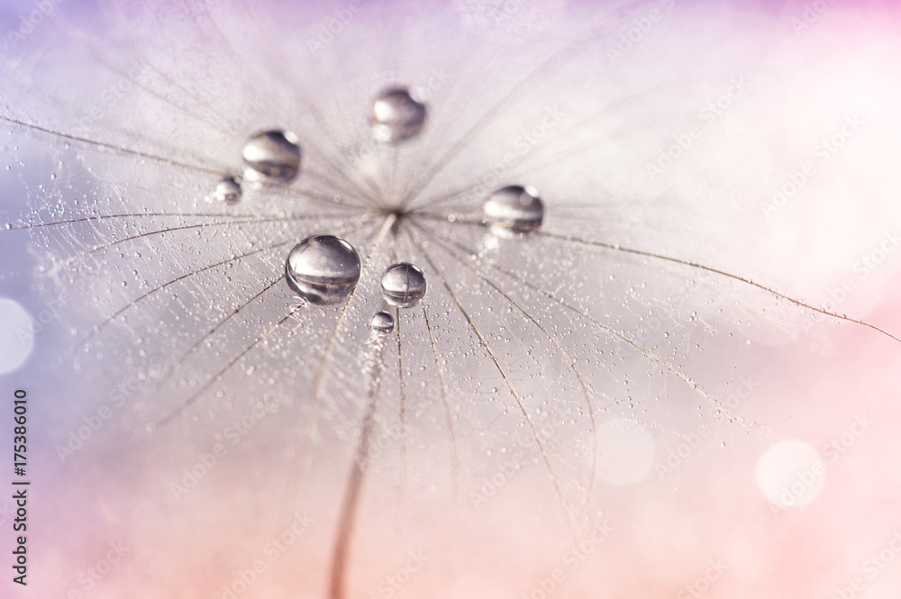 Fototapety, obrazy: Silver droplets of dew on a dandelion.Selective focus. Dandelion on a multi-colored neyunom background.