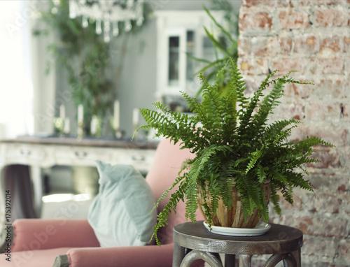 Green plant in contemporary interior