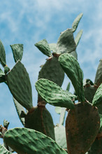 Bright Green Cactus Against The Blue Sky
