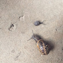 Big Snail And Baby Snail