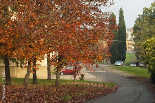 Fotobehang Zwavel geel autumn. a park