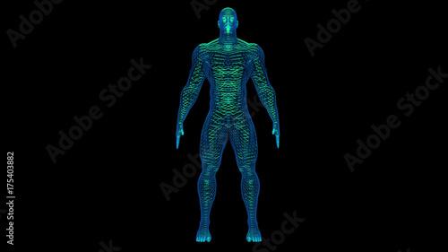 Fotografie, Obraz  Wireframe 3d man with glowing green filaments inside body