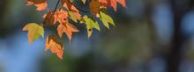 Close-up Vibrant Leaves Changi...
