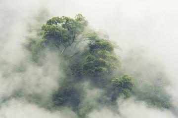tropikalny las w Japonii, vintage filtr obrazu