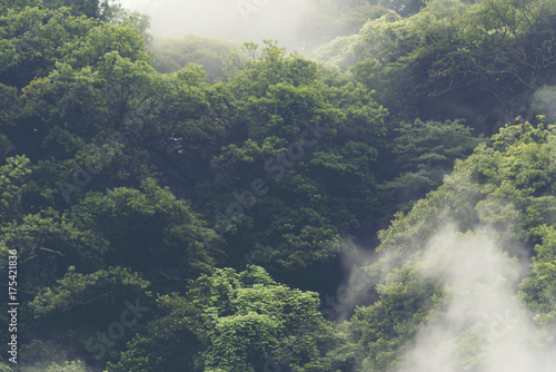 Chmury nad lasem