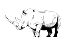 Attacking Big Rhinoceros Drawn...