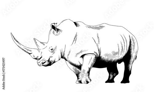 Fototapeta premium atakujący duży nosorożec narysowany ręcznie na białym tle oddzielony tatuaż