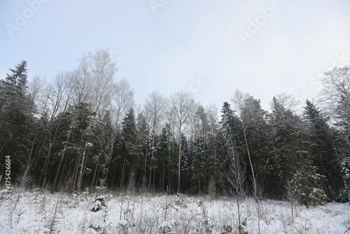 Papiers peints Foret brouillard winter landscape