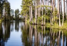 Pure Georgia Swamplands
