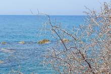 Thorny Bush Over The Sea