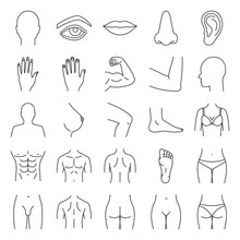 Human Body Parts Linear Icons ...