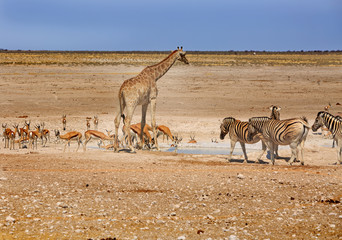 Waterhole in Etosha with vibrant blue sky teeming with lots of animals