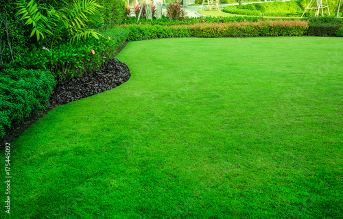 Fotografía  Decorative garden, Green lawn, the front lawn for background.