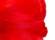 Flower Petal As Background