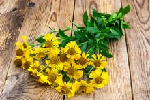 Yellow Flowers Of Helenium Gar...
