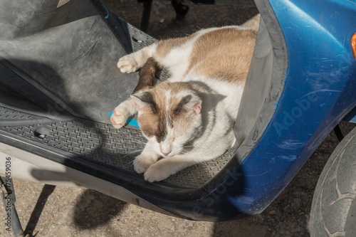 Fototapeta Schlafende Katze auf einem Motorroller
