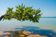 Beautiful Landscape Of Tree Growing Over Ocean At Beach Of Bijagos Island Bubaque, Guinea Bissau, West Africa
