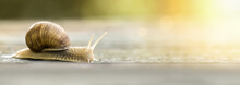 Slow Snail Crawling - Web Banner Idea