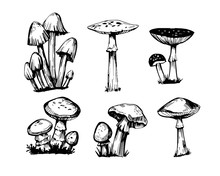 Set Of Outline Mushrooms