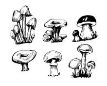 Set Of Outline Mushrooms
