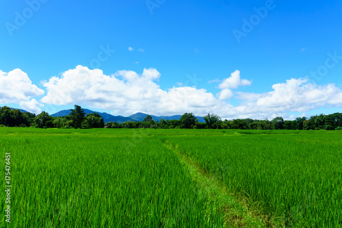 Foto op Plexiglas Groene panorama landscape of rice paddy field with blue sky and cloud and tree background.