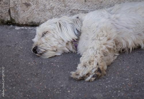 Armut, Straßenhund, obdachlos, stray puppies Fototapet