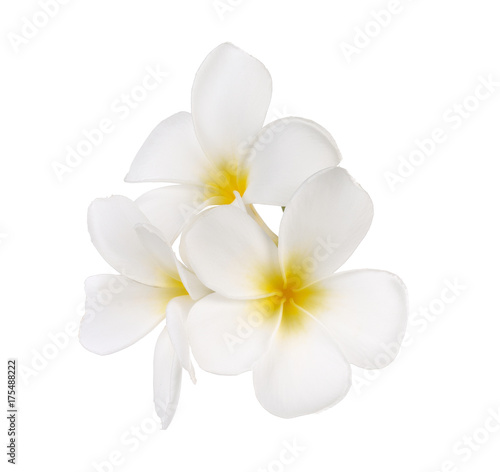 Deurstickers Frangipani Tropical flowers frangipani (plumeria)
