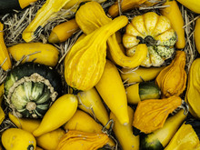 Different Decorative Gourds