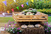 Pumpkins And Watermelons Pile Display On Wooden Box And Hay Bales Decorated With Flowers And Colorful Flags And Sunflowers Field On Background. Agriculture Harvest Exhibition, Organic Market Concept.