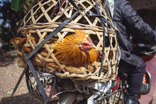 Chicken In The Cage