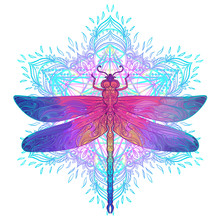 Ornate Dragonfly Over Colorful...