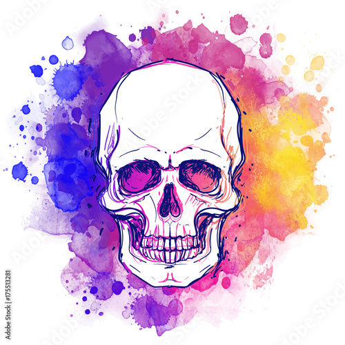 Printed kitchen splashbacks Watercolor skull Watercolor sketchy skull with red, blue and purple colors isolated on white background. Vector illustration.