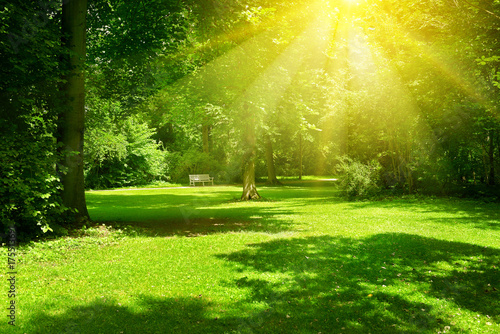 Poster Lime groen Bright sunny day in park. The sun rays illuminate green grass