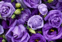 Beautiful Purple Roses Backgro...