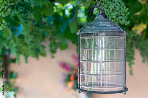 Lamp hanging in wine garden Poster