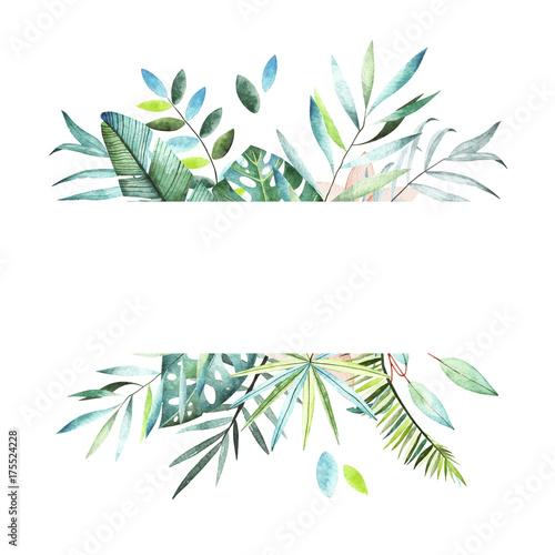 Foto  Tropical plants collection