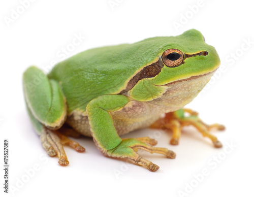 Foto op Aluminium Kikker Green frog isolated.