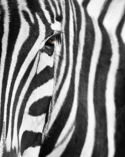 eye-of-a-zebra