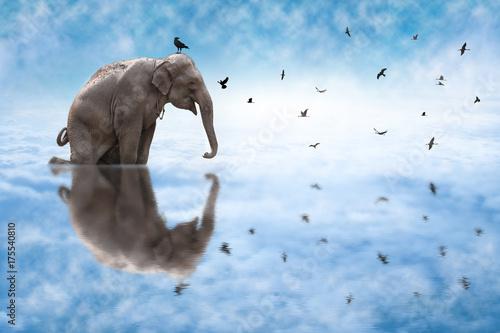 Plakat Słoń i sylwetka ptaki z niebieskiego nieba tłem.