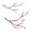 canvas print picture - Watercolor fall tree branch