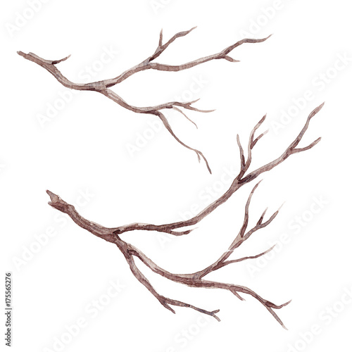 Leinwand Poster Watercolor fall tree branch
