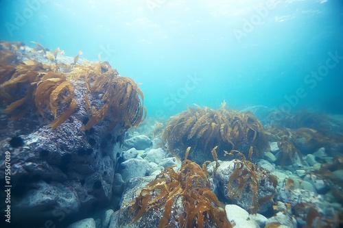 Staande foto Dolfijnen colony of sea anemones under water corals