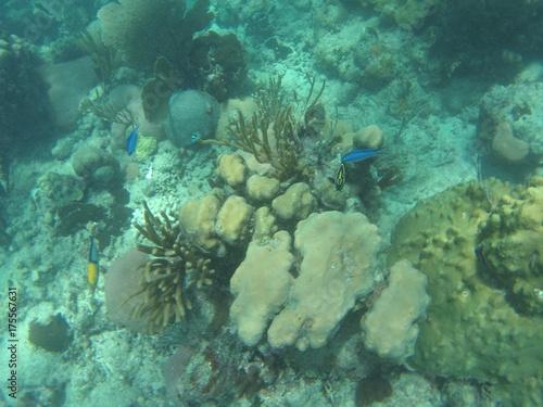 Fotografie, Obraz  fond sous marin