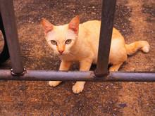 Yellow White Stray Little Kitt...